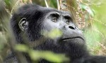 Uganda by air  Short Safaris